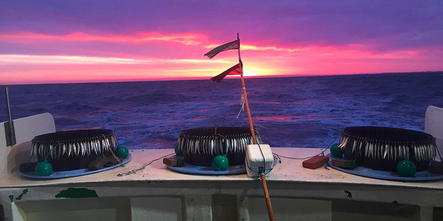 Quelle pêche durable sur nos côtes basco-landaises ?