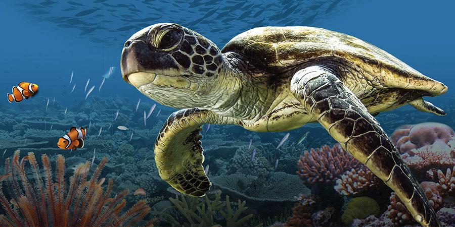 L'Odyssée de la tortue 3D