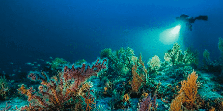 Planète Méditerranée